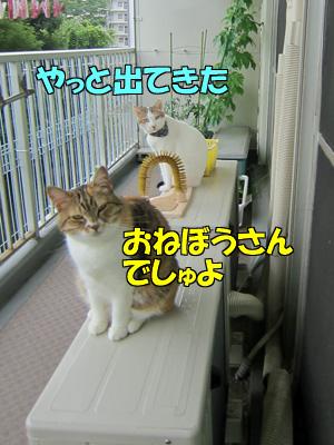 150613-01.jpg