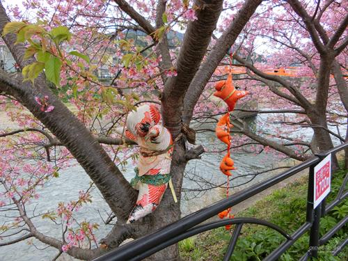 河津桜まつり2015_05
