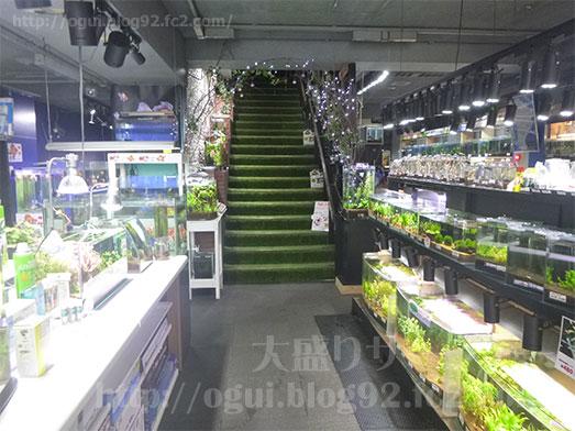 谷津Cafe緑の星アクアリウムヒロセペット008