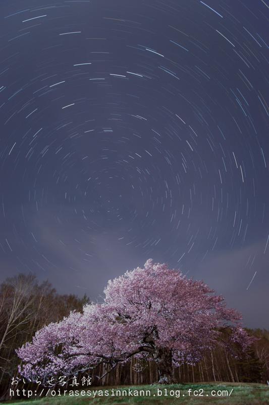 亀ヶ森一本桜1