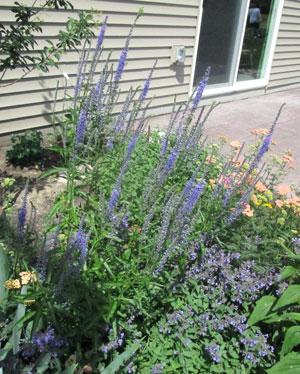 flower06191502.jpg