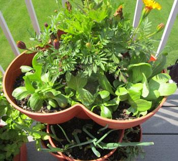 recyclegarden06061501.jpg