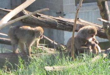 zoo1501.jpg
