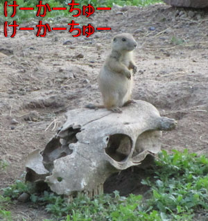 zoo1510.jpg