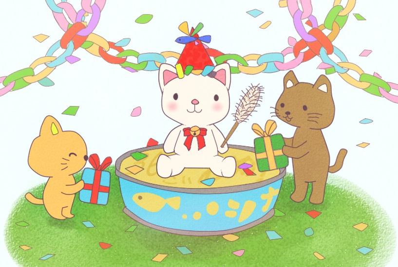 三毛猫2015