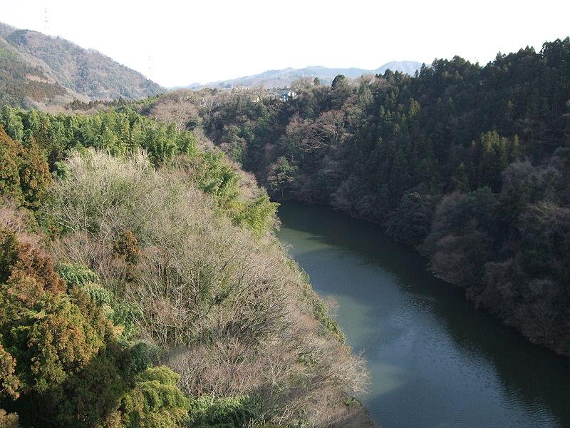 神奈川県・相模川で「鮎」が大量遡上…2011年以来、4年ぶり