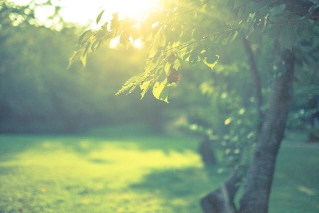 forest34643.jpg