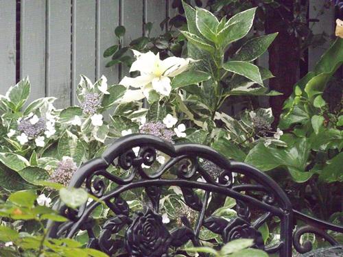 20150626今日の庭②