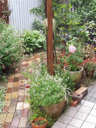 20150626今日の庭