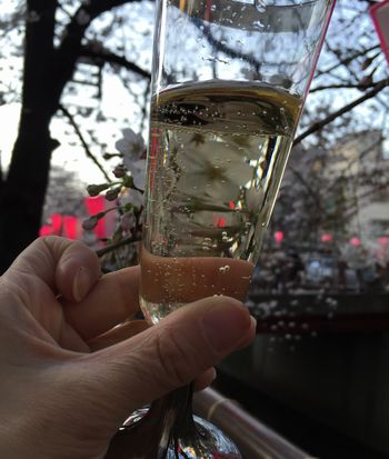 ワインと桜