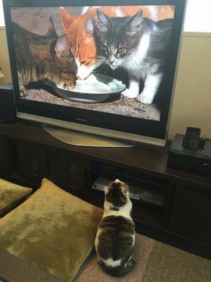 テレビとみーたん④