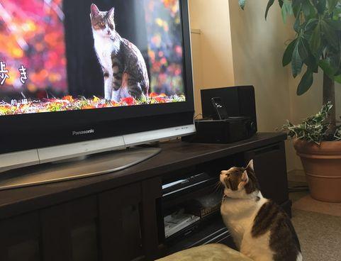 テレビとみーたん①