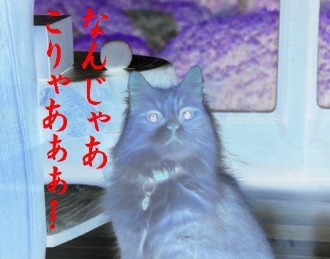 みーたん記念日①