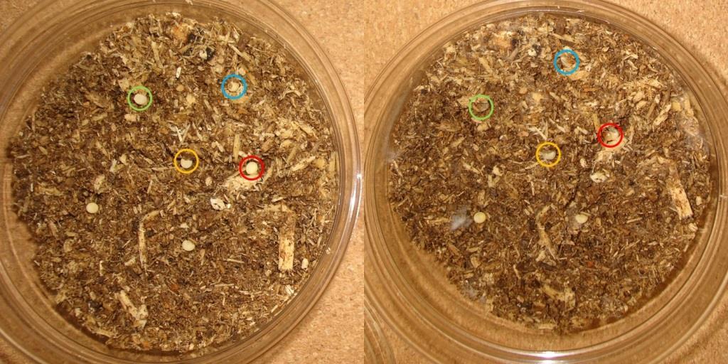 木片孵化前後圧縮