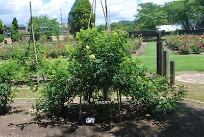 竹の使い方-1