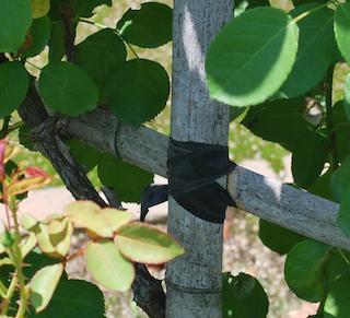 竹の使い方-3