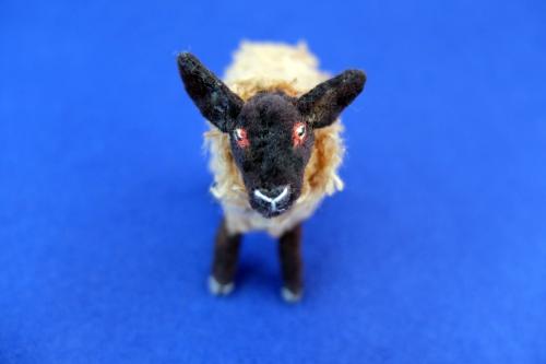 2015/4月サフォーク羊3
