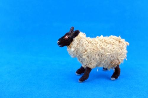 2015/4月サフォーク羊1