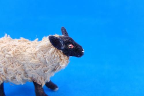 2015/4月サフォーク羊2