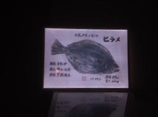 横ちゃん魚拓