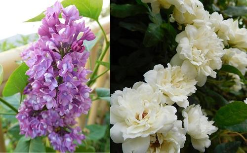 春の花2015-2
