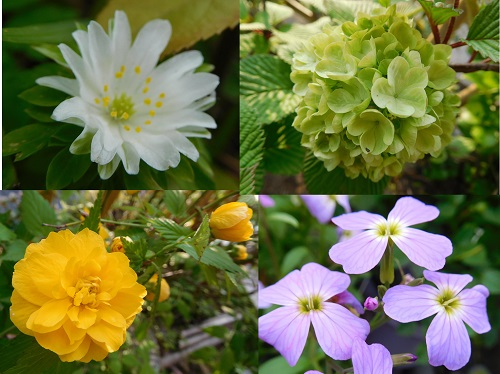 春の花2015-1