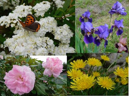 春の花2015-4