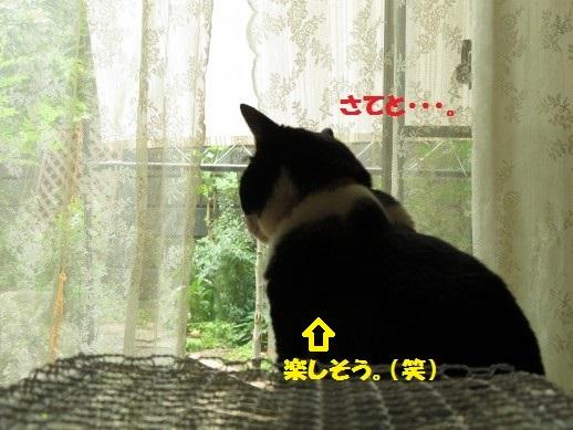 20150613-06.jpg