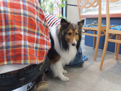 犬の足跡・足型