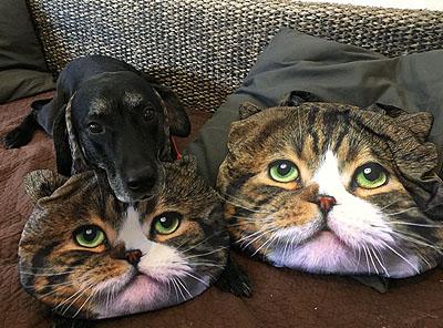 猫バッグにゅー。大中♪