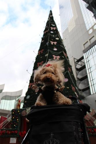 ドイツ・クリスマスマーケット