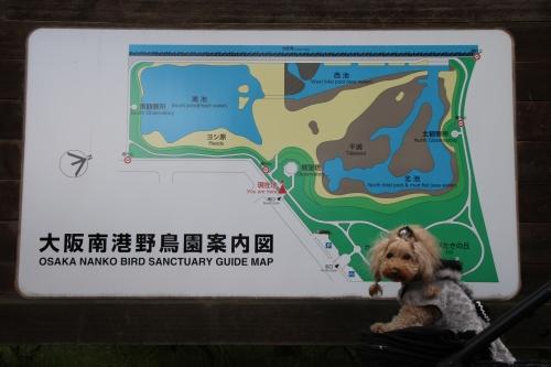 南港野鳥園