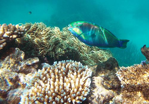 サンゴp02b