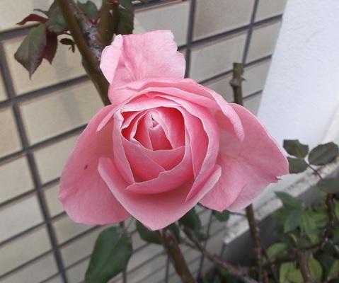 花0041