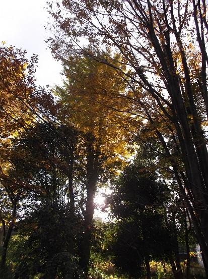 樹2993