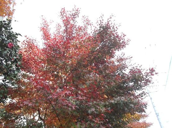 樹2962