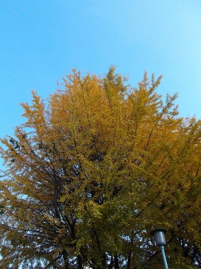 樹2777
