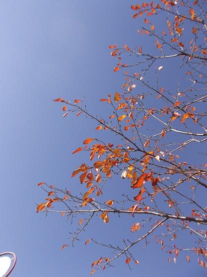 樹2916