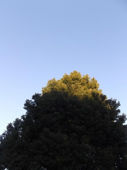 樹0095