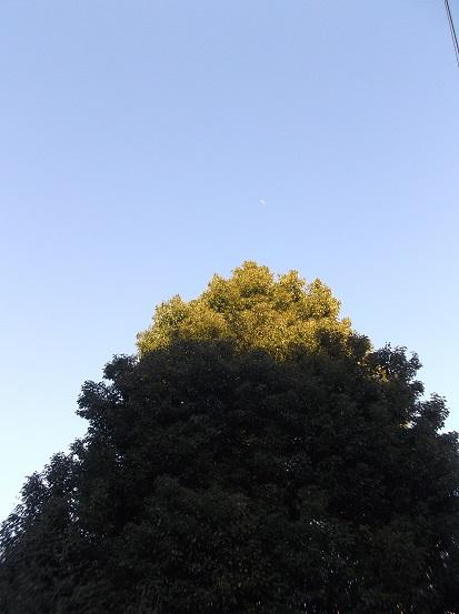 樹0096