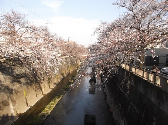 桜0466