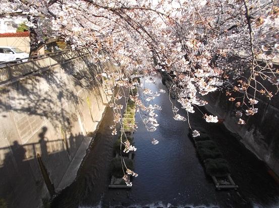 桜0470