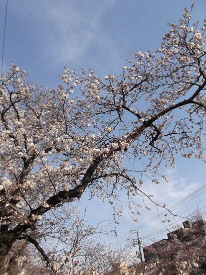 桜0478