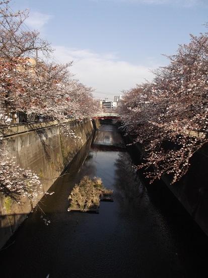 桜0461