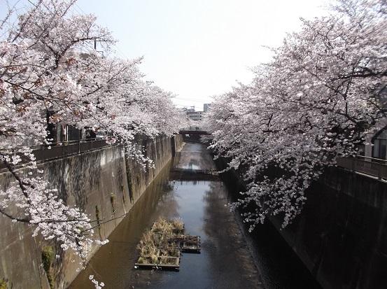 桜0479