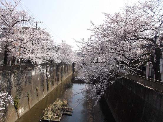 桜0481