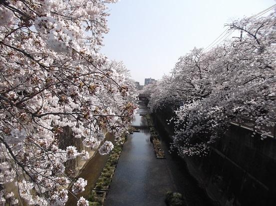 桜0502