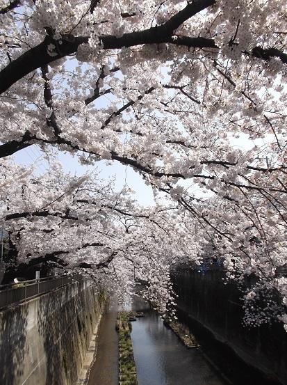 桜0574