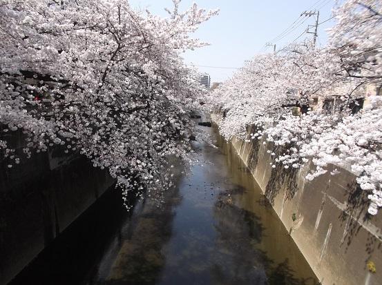 桜0570