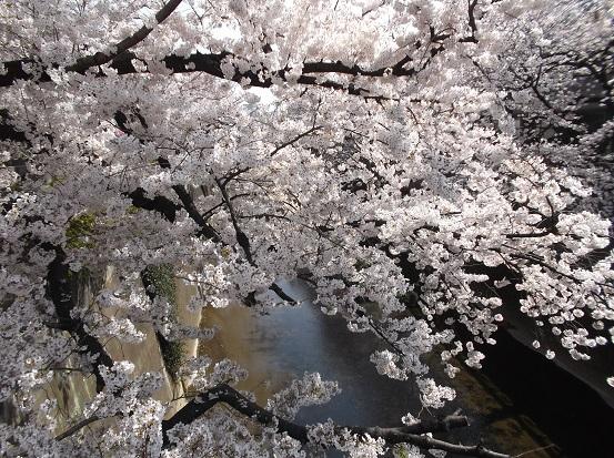 桜0563